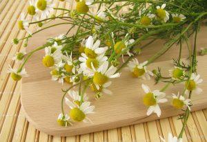Pack chamomile